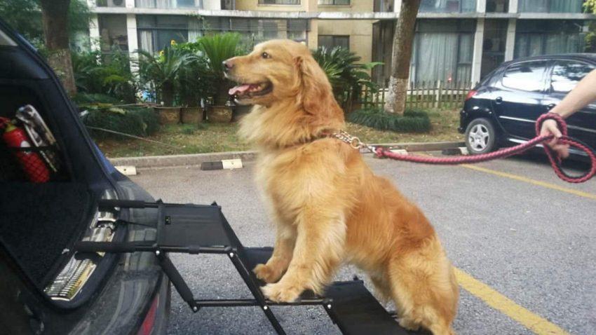 Flightbird Dog Ramps for Car